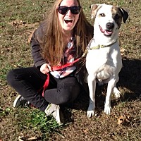 Adopt A Pet :: Patch - Midlothian, VA