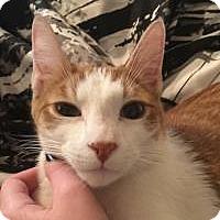 Adopt A Pet :: Seaver - Raritan, NJ