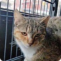 Adopt A Pet :: Sabita - Queens, NY