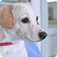 Terrier (Unknown Type, Small) Mix Dog for adoption in Freeport, Illinois - Abigail
