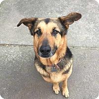 Adopt A Pet :: Rufus - Pleasant Grove, CA