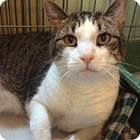 Adopt A Pet :: Bosley (aka Leo) - Breinigsville, PA