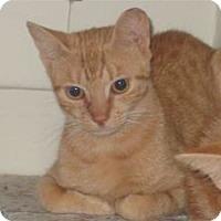Adopt A Pet :: Primrose - bloomfield, NJ