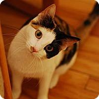 Adopt A Pet :: Elphie - Chicago, IL