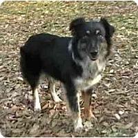 Adopt A Pet :: Anabelle - Orlando, FL