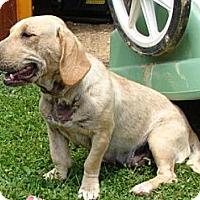 Adopt A Pet :: Taffy - Afton, TN