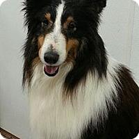 Adopt A Pet :: Loch **Adoption Pending** - North Vernon, IN