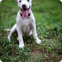 Adopt A Pet :: Lucy - Reisterstown, MD