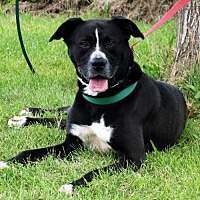 Adopt A Pet :: Molly II - Lacon, IL