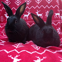 Adopt A Pet :: Zuko & Momo - Watauga, TX