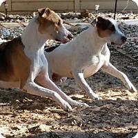 Adopt A Pet :: Brodie & Raven - Austin, TX