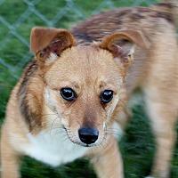 Adopt A Pet :: Smooch - Liberty Center, OH