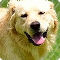 Adopt A Pet :: Lexus - New Canaan, CT
