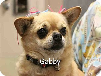 Chihuahua Mix Dog for adoption in Encinitas (San Diego), California - Gabby