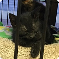 Adopt A Pet :: Jon Snow - Horsham, PA