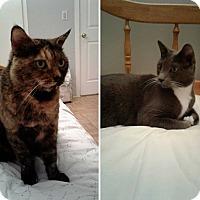 Adopt A Pet :: Hazel & Grayson - Bronx, NY