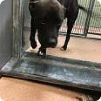 Adopt A Pet :: Lolly 0070 - Columbus, GA