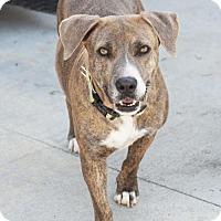 Adopt A Pet :: Rebecca - San Diego, CA