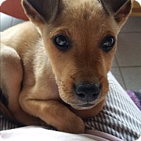 Adopt A Pet :: Scooby Dude - San Diego, CA
