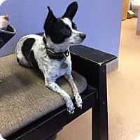 Adopt A Pet :: Jessie - Brooksville, FL