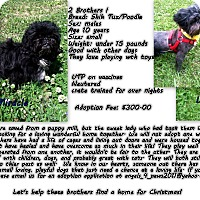 Adopt A Pet :: Lucky and Miracle - Fountain, CO
