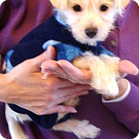 Adopt A Pet :: Rory - Osseo, MN