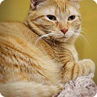 Adopt A Pet :: Oksana - Byron Center, MI