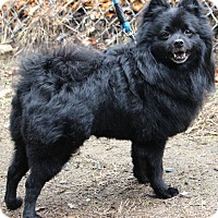 Adopt A Pet :: Max - Grafton, MA