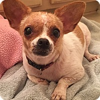 Adopt A Pet :: Cali - geneva, FL