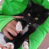 Adopt A Pet :: Joey - Santa Fe, TX