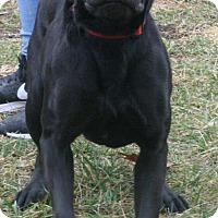 Adopt A Pet :: Max - Staunton, VA