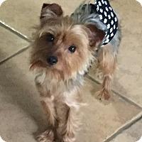 Adopt A Pet :: Yoda - Hobart, WI