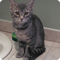 Adopt A Pet :: Heather - Plainville, MA