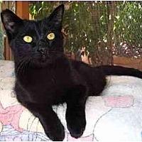 Adopt A Pet :: Niall - Toluca Lake, CA