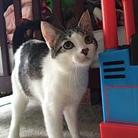 Adopt A Pet :: Nylah - Philadelphia, PA