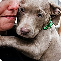 Adopt A Pet :: The Champagne Sisters - Reisterstown, MD