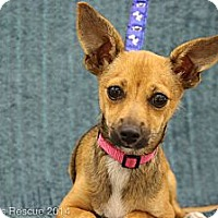 Adopt A Pet :: Whoopi - Broomfield, CO