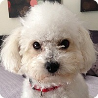 Adopt A Pet :: Jamie - La Costa, CA