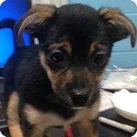 Adopt A Pet :: Hopper - Homewood, AL