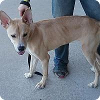 Adopt A Pet :: Thor - Jacksonville, NC
