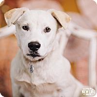 Adopt A Pet :: Oscar - Portland, OR