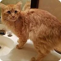 Adopt A Pet :: Lehman - Ennis, TX