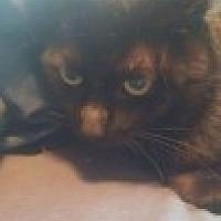 Adopt A Pet :: Pumbaa - McHenry, IL