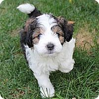 Adopt A Pet :: Hunkie - La Habra Heights, CA