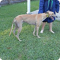 Adopt A Pet :: Rocket - Vidor, TX
