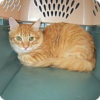 Adopt A Pet :: Sunshine - Easley, SC