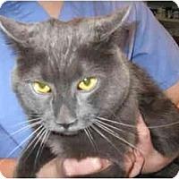 Adopt A Pet :: Apollo - Markham, ON
