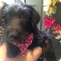 Adopt A Pet :: Kara - Foster, RI