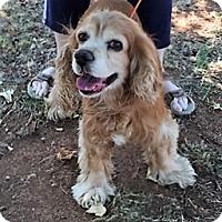 Adopt A Pet :: Yogi-ADOPTION PENDING - Sacramento, CA