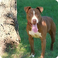 Adopt A Pet :: SEARGE - Pegram, TN